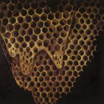 "TELEFON TEL AVIV ""Map Of What Is Effortless"" [ARTPL-090]"