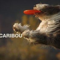 Caribouが待望の新曲「You Can Do It」をリリース&MV公開!今年最も幸福感に満ちたアンセム!